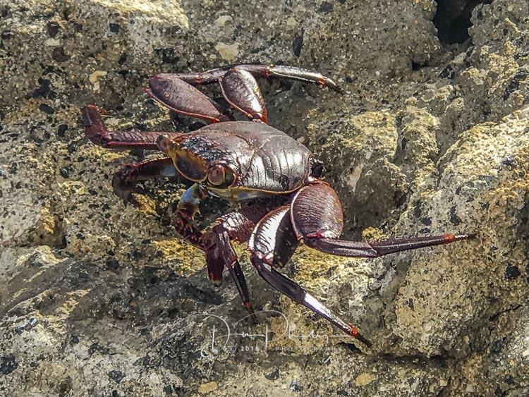 105 Galapagos 2018 20180618-IMG_1735